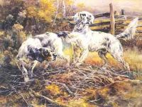english_setters_in_a_field