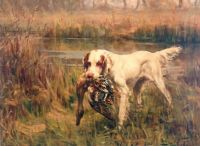 english setter retrieve a duck