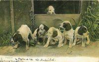 1904_3