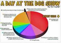 A Day at the Dog Show
